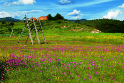 field in china with flowers