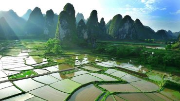 guilin rice fields under the sun