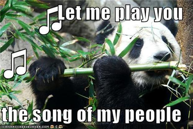 40 funniest pictures of panda bears on the internet right now 40 funniest pictures of panda bears on the internet right now voltagebd Image collections