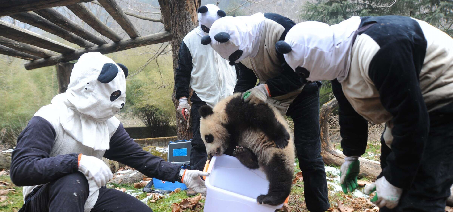 Sublime China's Ultimate Travel Guide to Watching Pandas in China