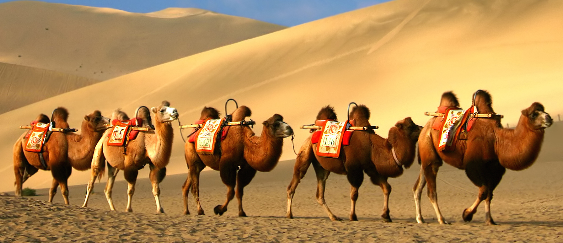 Silk Road Facts: The Most Interesting On The Internet